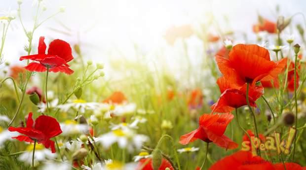 angol-nyelviskola-flower