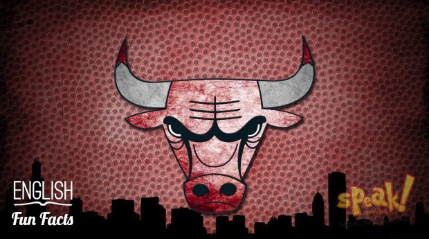 bulls-speak-nyelviskola