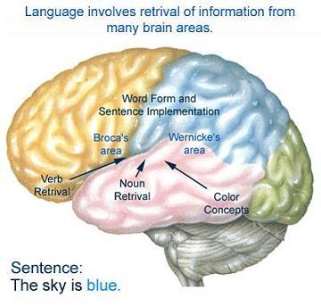A kép forrása: cdn-media-2.lifehack.org