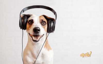 Hogyan fejleszd hatékonyan a hallásértésedet? (Beyonce segít)