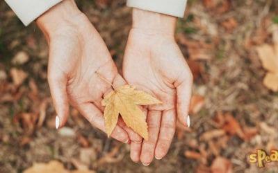 7 őszi angol idióma, amikkel szókincsed olyan színes lesz, mint a hulló falevelek